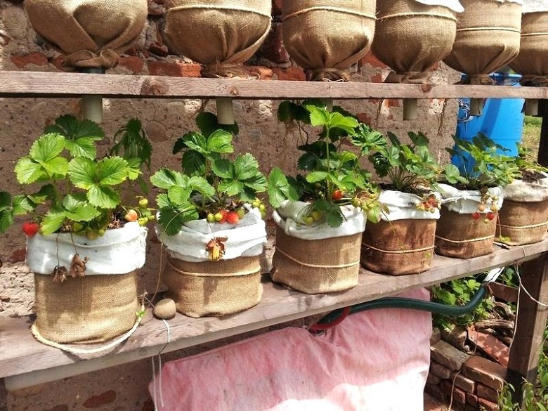 vertical DIY planters