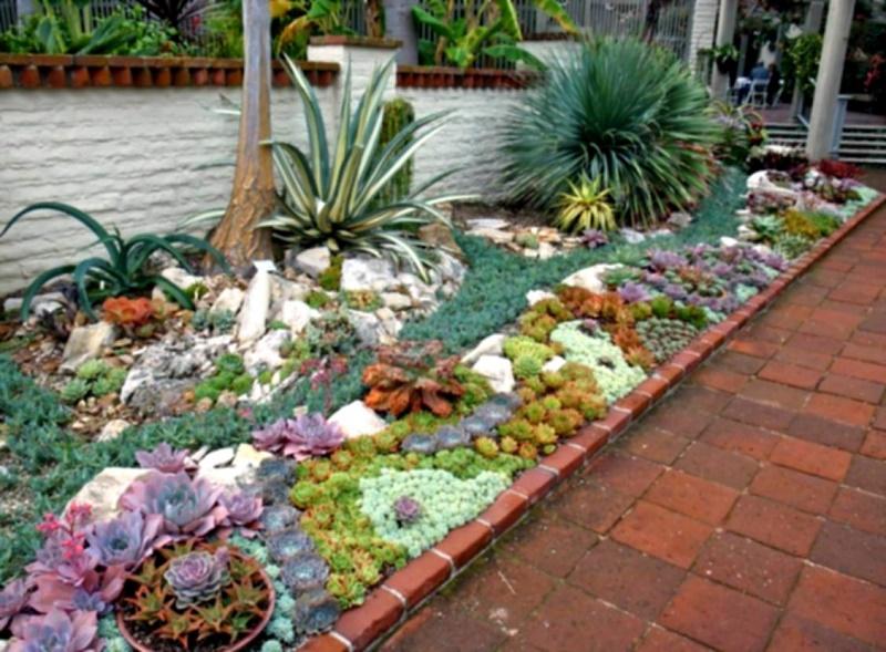 cactus decoration Ideas