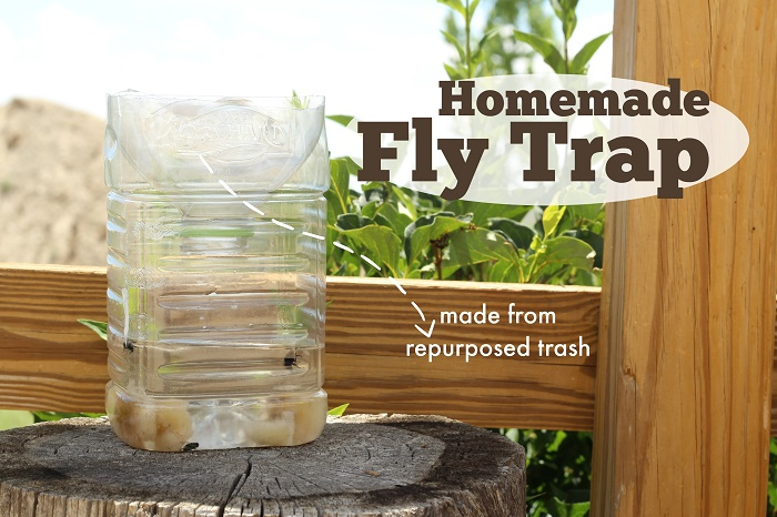 homemade fly killer
