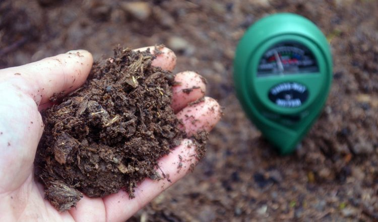 How to Measure Soil Ph